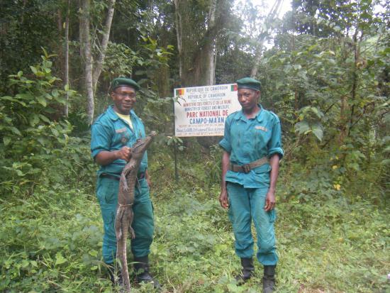 South Region, Camerun: Ecoguards about to release a dwarf crocodile near Bongola Bridge