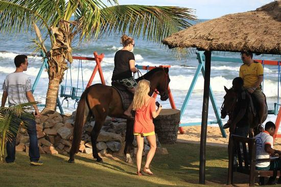 Coconut Grove Beach Resort Horse Back Riding