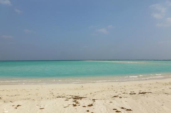 貝拾い - 久米島町 久米島、はての浜の写真 - トリップアドバイザー