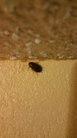 Super 8 Indianapolis: Cockroach on the ceiling of the room.