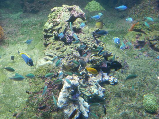 Lamantino picture of acquario di genova genoa tripadvisor for Pesci tropicali acquario