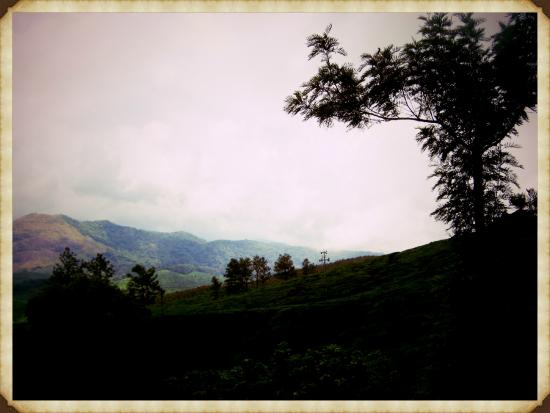 Emarald Wyte Mist Munnar: Viiew from the Balcony