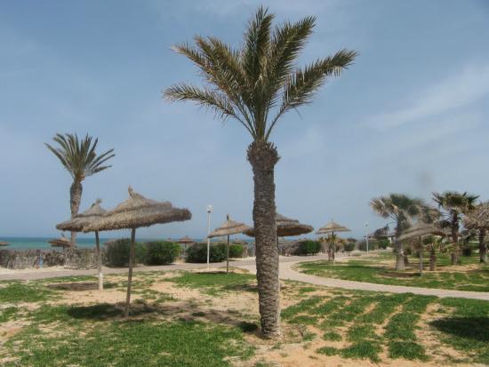 Hotel Al Jazira Beach & Spa : les alentours de l'hotel