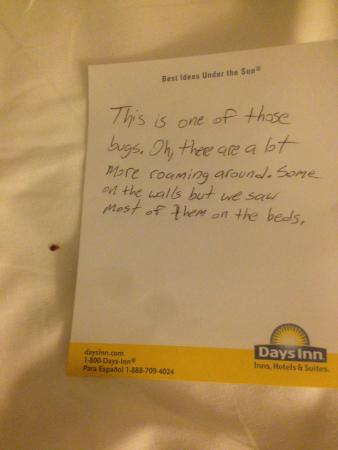 Days Inn Gainesville University: Bed Bug on bed