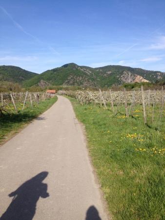Wein & Wachau : Trasa rowerowa z Melk do Krems