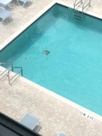 Staybridge Suites Tampa East - Brandon: Dirty Pool and Pool Area