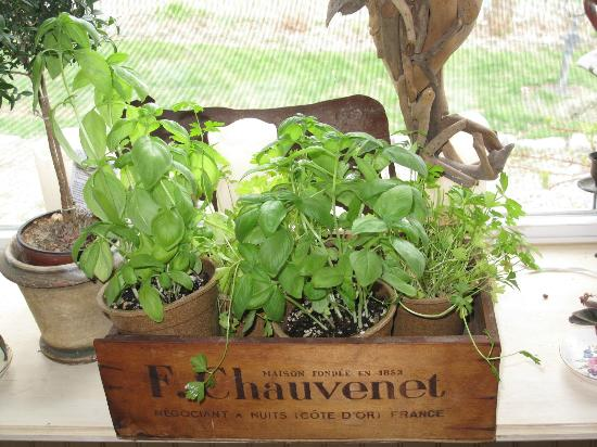 MeadowLark Farm Bed and Breakfast: thriving herb box, thanks to Dorothy's green thumb!
