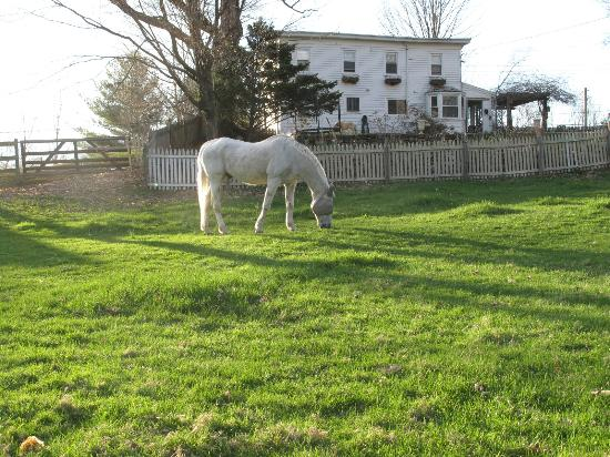 MeadowLark Farm Bed and Breakfast: Smokey in the pasture with the Farmhouse B&B in back