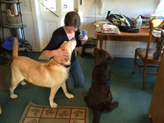 MeadowLark Farm Bed and Breakfast: Two well behaved Labs!