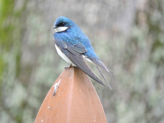 Asheville River Cabins: Tree Swallow
