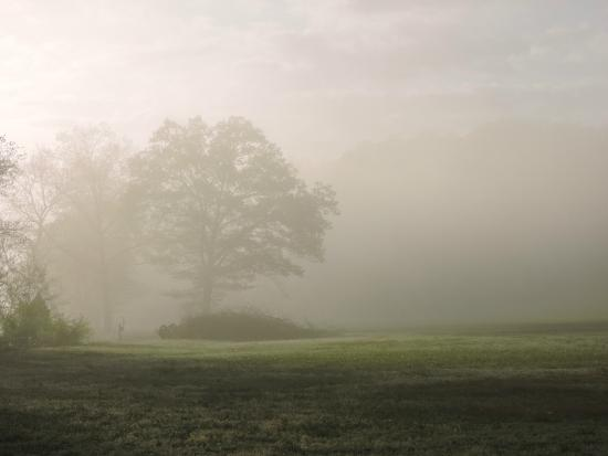 Asheville River Cabins: Foggy morning by the river