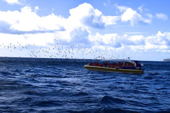 Tasman Island Cruises: 2nd boat on our tour near migrating mutton birds