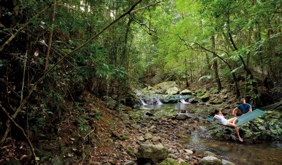 Murwillumbah, Australia: Stunning rainforests