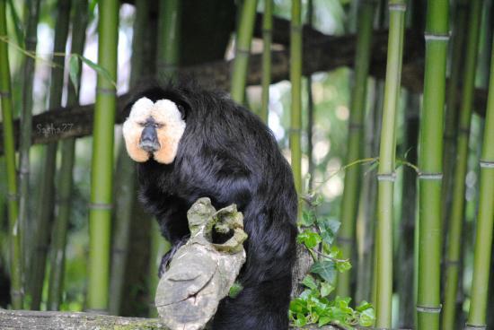 C 2015 sasha auffret for Zoo haute normandie