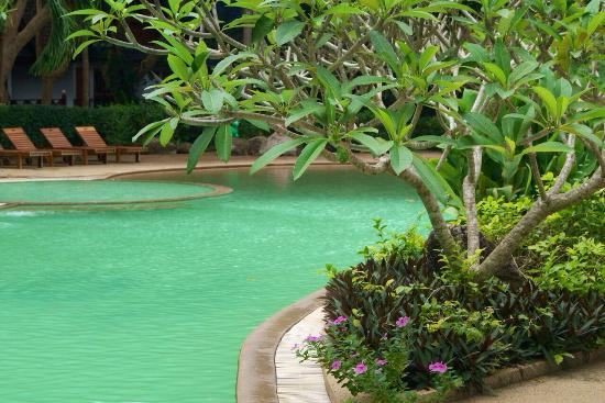 Coral Island Resort: Шикарный бассейн
