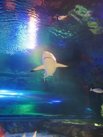 アンダーウォーター ワールド, 一番動き回るのはサメ。