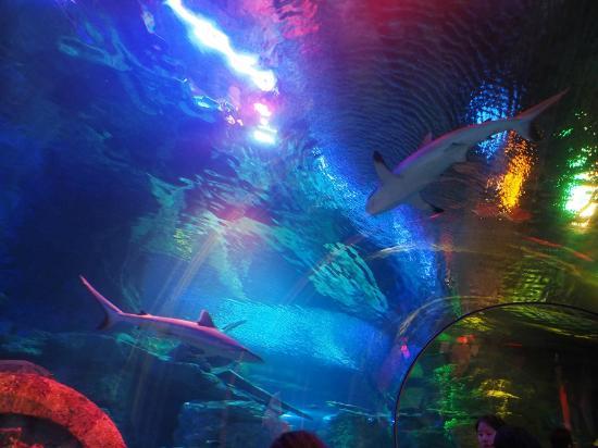 アンダーウォーター ワールド, 頭上をサメが泳ぎ回ります。