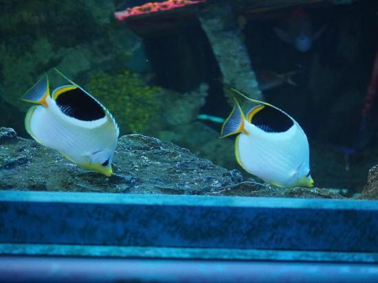 アンダーウォーター ワールド, 熱帯魚のダンスが目の前に