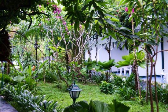 KAMALA BEACH INN: Территория отеля. Зеленый сад