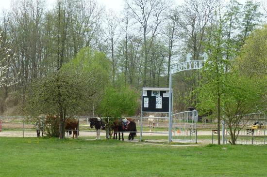 Schloss Diedersdorf - Ponyhof