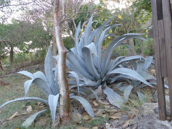 Miriam C. Schmid Botanical Garden