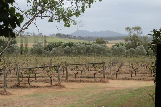 Tranquil Vale Vineyard: View from the pool