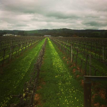 Kangarilla Road Winery