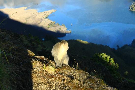 Mount Rinjani: Segara Anak dari Plawangan