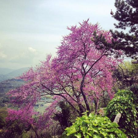 Agriturismo Sant'Ilario sul Farfa: Vista panoramica