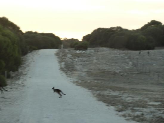 Flour Cask Bay Retreat: Joey running cross the road