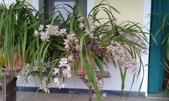 Agriturismo Gallerani : orchidea