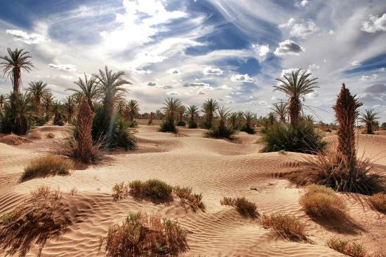 Sahara Tours International - Marrakech