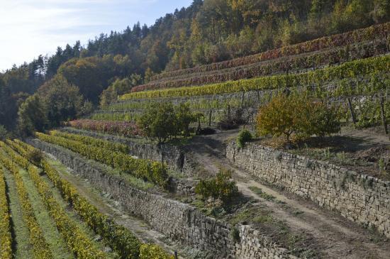 Cortemilia, Italy: I vigenti Terrazzati