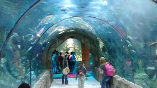 Túnel do aqu&#225...