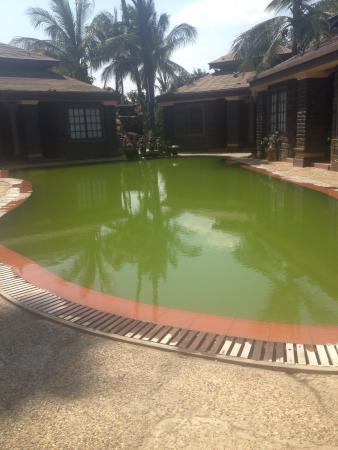 Disgusting pool