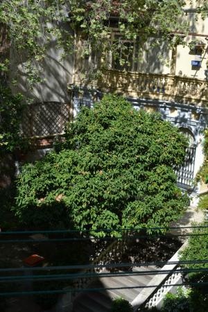 Villamanez Hostal : Za oknem drzewko i ptaki ;)