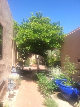 Adobe Rose Inn: Lemon tree!