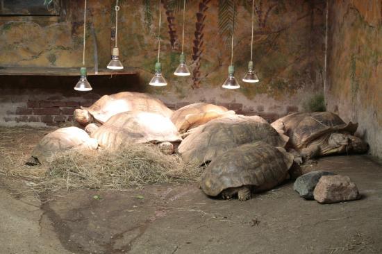 Iguana Reptile Zoo