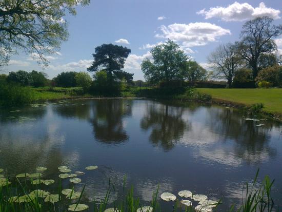 Foto de hole park gardens rolvenden the egg shaped pond for Garden pond kent