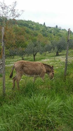 """Allegro Agriturismo Argiano: """"Simpatico vicino di casa"""""""