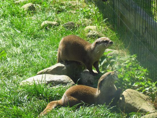WWT Washington Wetland Centre: Otters