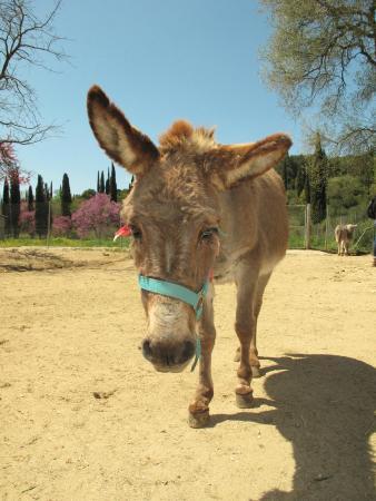 donkey - Foto van Corfu Donkey Rescue, Paleokastritsa ...