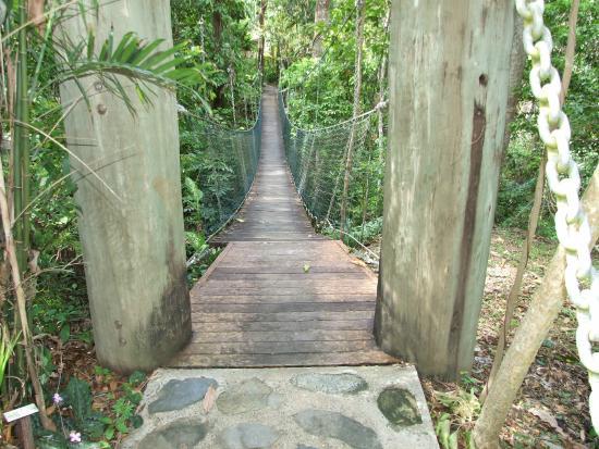Bloomfield Lodge: Rope bridge
