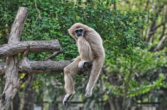 Si Racha, Thailand: Зоопарк Као-Кео