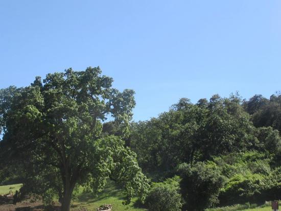 Pleasanton Ridge Regional Park, Sunol, CA
