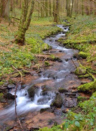 Schwarzwaldstube : Un cadre idéal pour une balade en forêt avant de passer à table !