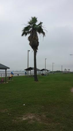 Surfside Jetty Park: Covered picnic areas to share a snack