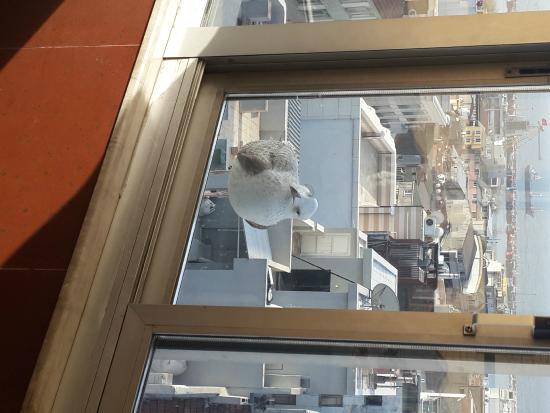 Aspen Hotel Ist: Terrace view