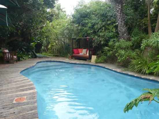 Palms Wilderness Retreat: Pool