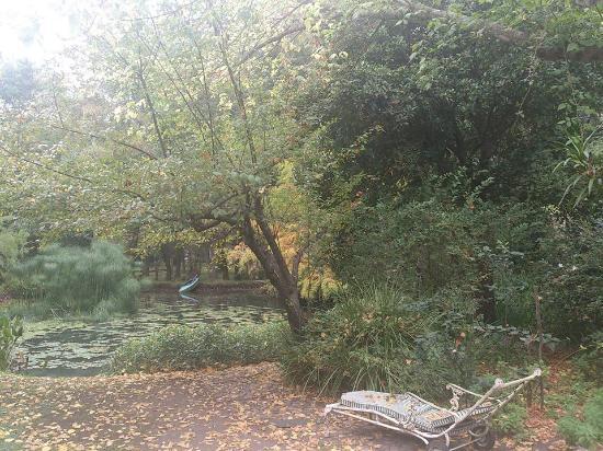 High Hopes of Greyton : The pond